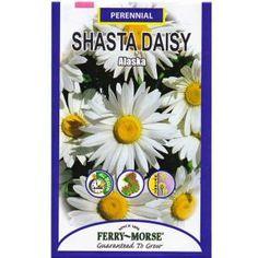 Ferry-Morse 250 mg Alaska Shasta Daisy Seed-1141 at The Home Depot