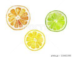 オレンジ、レモン、ライムの水彩イラスト もっと見る