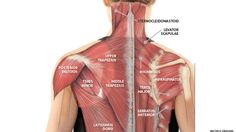 Yoga Anatomy: Use Yoga to Ease Neck Tension from Slouching. The vast majority of us tend to adopt this shoulders-hunched, neck-craned-forward posture regularly throughout our day thanks to our desk-bound jobs. Learn how yoga can reverse its effects.