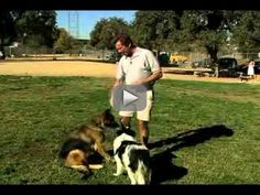 New video_ Basic Dog Training Tips _ How to Train a Dog to Stay Watvh now!.flv -    funny dog petst raining puppy training cats potty trainig dog whisper k9  funny animals  best dog videos  jus for laugh dog trainig tehniques collars dog trainig classes dog trainig service grooming pets dog trainig at home dog trainig schools dog trainig tricks dog trainig advice puppy training book dog trainig book dog trainig video advanced dog trainig search and rescue dog trainig k9 puppy training dog