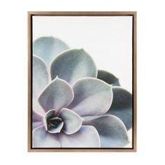 Bring the beauty of symmetry and nature into your home with this gorgeous modern succulent art. Printed and framed in the USA in Waunakee, Wisconsin, this framed floating canvas art with its muted color palette will be pure pleasure to look at every day in your living room, bedroom, nursery or any room in the home. Printed on gallery-wrapped canvas and framed with a gold high-quality polystyrene frame, this succulent wall art has two hangers already attached to the black inset back for easy…