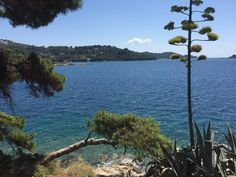 The colour of peace. A view from the top of a hill in Skiathos Greece. #MyColourOfSummer Ettinger @ettingerlondon