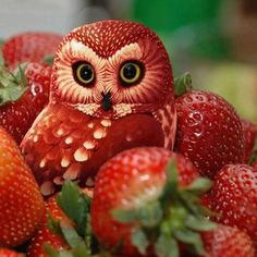Amazing Fruit Art. Believe It Or Not This Cute Owl Is Made Of Strawberries.