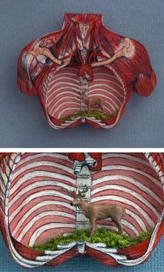 Image courtesy Anatomy UK.