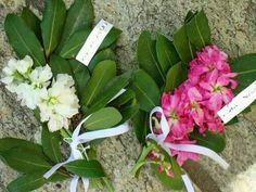 Τα βάγια - Ένα παλιό έθιμο του Ξηρομέρου - ΑΣΤΑΚΟΣ NEWS - Για να τα ξέρετε όλα! Plants, Blog, Planters, Plant, Planting
