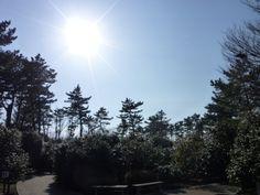 """""""Tsubaki-en""""(Camelia Giardino), Komuroyama, Ito, Izu(Shizuoka), Japan"""