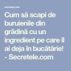 Cum să scapi de buruienile din grădină cu un ingredient pe care îl ai deja în bucătărie! - Secretele.com Household Cleaning Tips, Science And Nature, Vegetable Garden, Diy And Crafts, Home And Garden, Health, Gardening, Decor, Gardens