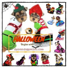 Bootiful Pet Costumes for Dogs and Cats. Choose from Oktoberfest Lederhosen Alpine Boy and Girl, Witches, Dogula Vampire,Wizard of Oz,Nurse,Knight,Butler,French,Maid,Christmas themes,Dorothy,Elf,Dragon,Fairy, Gypsy, Prince,Princess,Chef,Jester, Harley Quinn,Raggedy Dolls,Fireman,Sherlock Bones, Cowboy,Cleopatra,Tuxedo,Bow Ties,Hats,Indiana Bones,King Tut, Pirate, Astronaut,Medieval Knight, Doctor,Mouse,Lady Bug,Giraffe,Butterfly,Rabbit,Calypso,Mardi Gras,Clown,and more