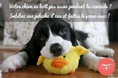 Un conseil pour mieux vivre la canicule avec votre chien !