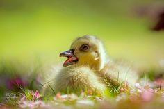 Spring Baby by JHAtala via http://ift.tt/2r9hY8R