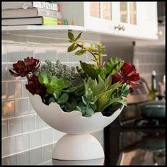 eggshell-ceramic-indoor-planter-succulent-arrangement-6