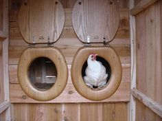 A two-holer chicken coup!  you gotta love the owners humour here lol