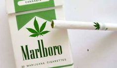 """Phillip Morris Introduces Marlboro Marijuana Cigarettes.  Phillip Morris, the world's biggest cigarette producer, announced today that they will join the marijuana legalization bandwagon and start producing marijuana cigarettes. Marketed under the brand """"Marlboro M"""", the cigarettes will be made available for sale through marijuana-licensed outlets in the state of Colorado, and the state of Washington when it becomes commercially legal there later this year."""