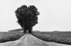 brie countryside / henri cartier-bresson