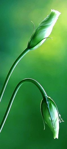 Green - it's never easy being green - but its worth the effort and the grace sometimes just appears