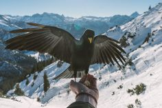 Feeding the birds up in the German alps (6000x4000)