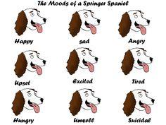 Moods Of A Springer Spaniel by danhateskevs.deviantart.com on @deviantART