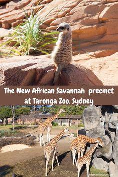 African Savannah at Taronga Zoo, Sydney