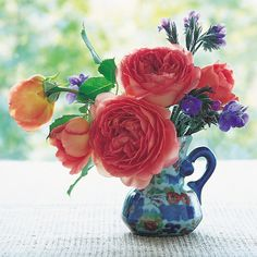 Rose Gardening Tips for cutting garden roses to bring them in the house - FineGardening - A guest post from Michael Marriott of David Austin Roses Fragrant Roses, Shrub Roses, Roses David Austin, Rooting Roses, Rose Pictures, Climbing Roses, English Roses, Raised Garden Beds, Raised Bed
