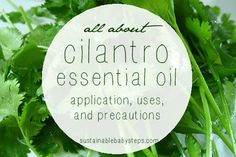 Learn how to use cilantro essential oil to support digestive health, emotional balance, the nervous system, immunity, and more., via SustainableBabySteps.com