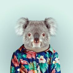 KOALA by Yago Partal. It is a koala in a shirt. But, since I don't have a koala in a shirt board, I am gonna leave this here. The Zoo, Zoo Animals, Funny Animals, Cute Animals, Funny Koala, Wild Animals, Zoo Book, Iphone 6 Wallpaper, Wallpaper Ideas