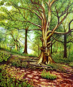 Under the Canopy. Original oil painting on canvas of trees in the woodland of Baggeridge Country Park - Himley Hall South Staffordshire by Roger Turner Oil Painting On Canvas, Painting & Drawing, Painting Still Life, Original Art For Sale, Online Gallery, Canopy, Illustrators, Woodland, Trees
