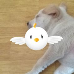 Unlike this puppy, PicPic never sleeps!