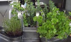 Je conserve mes herbes fraîches dans mon congélateur afin de me simplifier la vie. Basilic, menthe, coriandre, ciboulette, estragon, persil ou encore romarin, mes herbes aromatiques ont toutes une place dans mon congélateur.  Découvrez l'astuce ici : http://www.comment-economiser.fr/conserver-herbes-fraiches-congelation.html?utm_content=buffer1cd58&utm_medium=social&utm_source=pinterest.com&utm_campaign=buffer