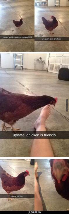 Chicken Friend#funny #lol #lolzonline