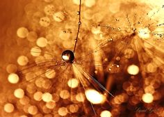 Liquid Gold by *Sandy515