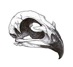 Hawk Skull Tattoo Flash by DickStarr.deviantart.com on @deviantART