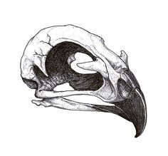 Grey Ink Hawk Skull Tattoo Design
