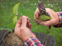 Foto: Anders Kronborg Pruning Shears, Garden Tools, Pergola, Gardening Scissors, Yard Tools, Outdoor Pergola