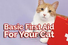If your feline friend is ever injured, knowing how to carry out basic first aid could mean the difference between life and death. This guide will help you be prepared for an emergency give you guidelines... Cat Info, Cats And Kittens, Kitty Cats, Basic First Aid, Diabetes Cat, Animals And Pets, Cat Health, All About Cats, Pet Care