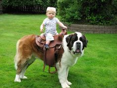 Who can come up with the best caption?!  #saint Bernard #baby