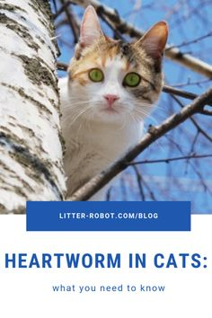 Heartworm in Cats: What You Need To Know | Litter-Robot Blog Litter Robot, Outdoor Cats, Veterinary Medicine, Cute Animal Pictures, Need To Know, Cat Lovers, Cute Animals, Pets, Dog Food