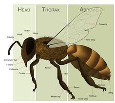Backyard Beekeeping - Beekeeping for Beginners