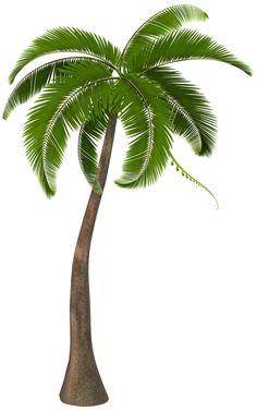 Palm Tree Clip Art, Palm Tree Png, Palm Tree Drawing, Palm Trees, Tree Clipart, Clipart Images, Trees Top View, Flamingo Painting, Coconut Palm Tree