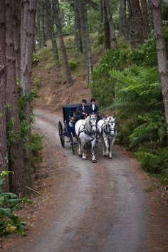 Coach | A Carriage Ride through the forest, complete with coachmen and white horses