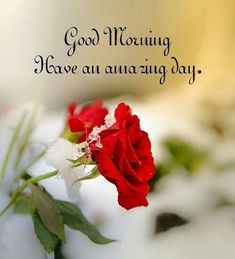 Good Morning Love Quotes For You to Life Sayings - The Quotes Good Morning For Him, Good Morning Funny, Good Morning Texts, Good Morning Picture, Good Morning Flowers, Good Morning Messages, Morning Pictures, Morning Humor, Good Morning Wishes