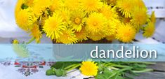 All About Dandelions—health benefits, recipes and harvesting info