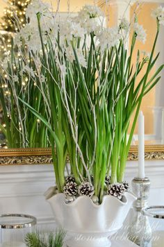 StoneGable: CHRISTMAS PAPERWHITES Great idea for a winter time centerpiece. Paperwhites in a white container, white painted twigs, plus white painted pine cones.