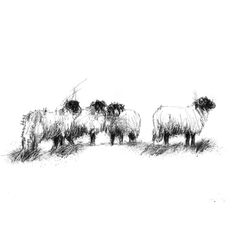 Sketch A Day, Line, Sheep, Sketches, Drawings, Artist, Prints, Fishing Line, Artists