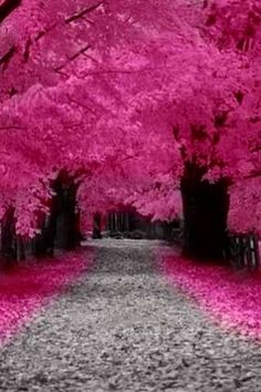 pink trees where is this? It's beautiful Beautiful World, Beautiful Places, Tree Tunnel, Pink Trees, Pink Leaves, Amazing Nature, Pretty Pictures, Beautiful Landscapes, Wonders Of The World