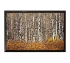 "Aspen Trees by Jennifer Meyers, 42 x 28"", Ridged Distressed, Black, No Mat"