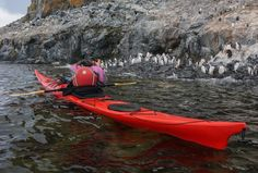 kayaking with penguins