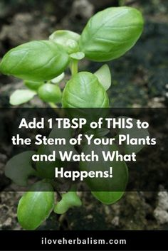 Add 1 TBSP of THIS to the Stem of Your Plants and Watch What Happens!