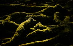 cool Old Tree Moss Free Download Picture