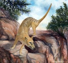 Thylacine de Candela Riveros en ArtStation.