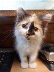 here kitty kitty kitty... :)